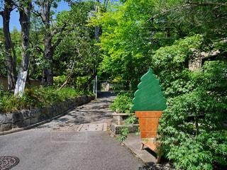 庭の木の写真・画像素材[1178148]