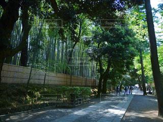 道の端に木の写真・画像素材[1178152]