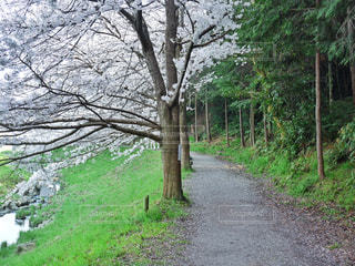 ツリーの側に木にパスの写真・画像素材[1178158]
