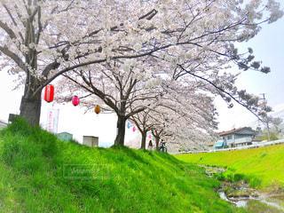 背景の木と大規模なグリーン フィールドの写真・画像素材[1178160]