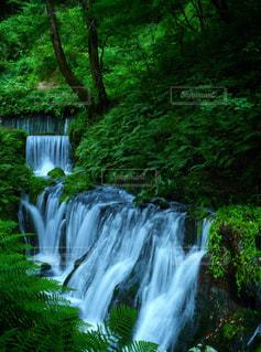 木々 に囲まれた滝の写真・画像素材[1178169]