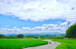 近くに緑豊かな緑のフィールドのの写真・画像素材[1178177]