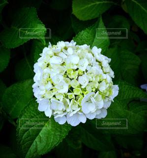 近くの花のアップの写真・画像素材[1178186]