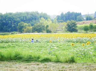 背景の木と大規模なグリーン フィールドの写真・画像素材[1428340]