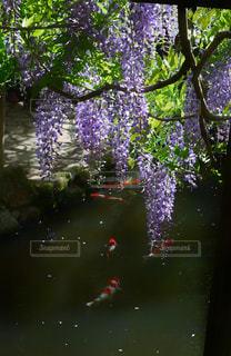 花の写真・画像素材[2170263]