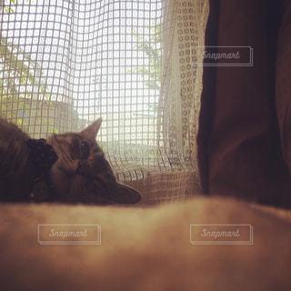 窓の前に座っている猫の写真・画像素材[973719]