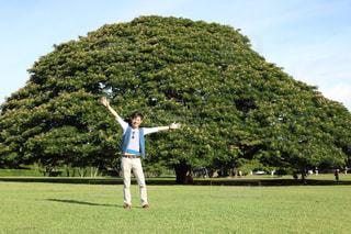 モアナルア•ガーデン モンキーポッドの写真・画像素材[1002269]