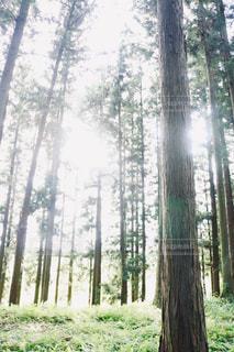 木漏れ日の写真・画像素材[2679528]