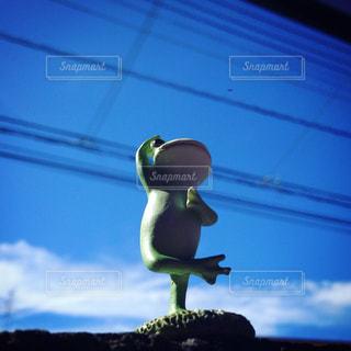 夏空の下のカエルちゃんの写真・画像素材[1121598]