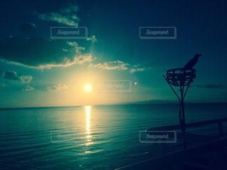 海と鳥 - No.951315