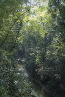 等々力渓谷の写真・画像素材[951322]