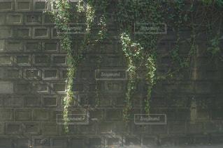 等々力渓谷の写真・画像素材[951351]