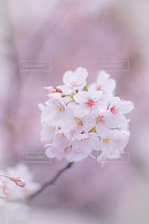 花の写真・画像素材[2061738]