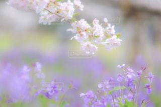 花の写真・画像素材[2061748]