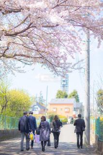 花の写真・画像素材[2061752]