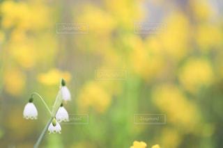 花の写真・画像素材[2061755]