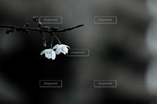 花の写真・画像素材[2061758]