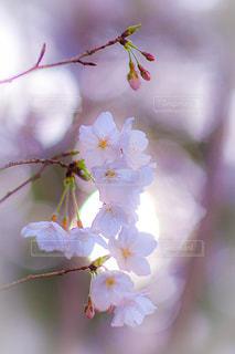 花の写真・画像素材[2061760]