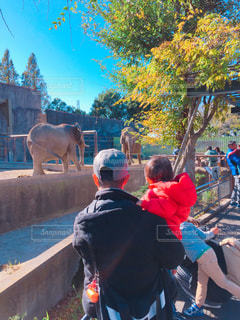 親子,子供,象,動物園,父,子,お父さん