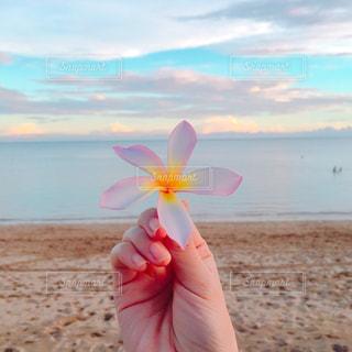 花,ビーチ,フラワー,バリ