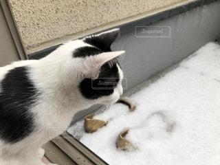 白い面の上に座って猫の写真・画像素材[995459]