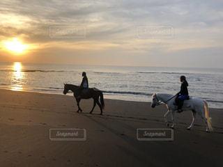 海,空,太陽,ビーチ,砂浜,海岸,光,馬
