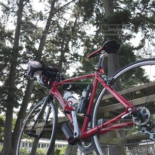 アウトドア,自転車,緑,樹木,サイクリング,休日,ロードバイク