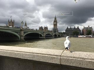 橋の上の鳥立ちの写真・画像素材[952101]