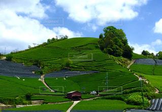 茶山の写真・画像素材[1055084]