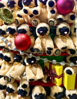 犬,冬,動物,ブルドッグ,かわいい,リボン,クリスマス,りぼん