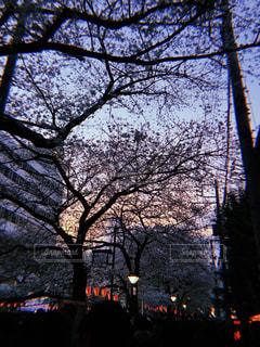 空,花,桜,夕焼け,レトロ,目黒川,目黒川の桜