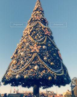 冬,青空,クリスマス,ツリー,ディズニー