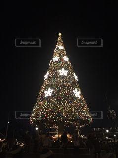 綺麗,キラキラ,クリスマス,クリスマスツリー,星に願いを