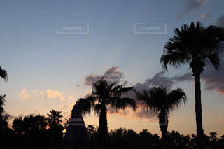 背景の夕日とヤシの木のグループの写真・画像素材[1301572]