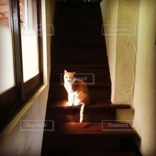 猫の写真・画像素材[31017]