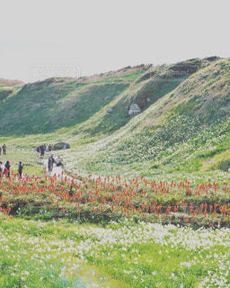 近くに緑豊かな緑のフィールドのの写真・画像素材[954498]