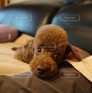 犬 - No.973829