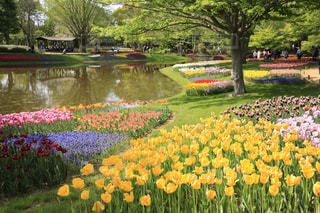 バック グラウンドでキューケンホフと庭の黄色の花の写真・画像素材[1138769]