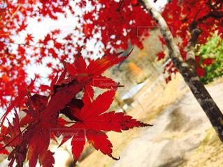 秋,紅葉,大阪,もみじ,能勢町