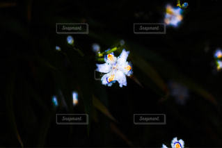 近くの花のアップ - No.1135825