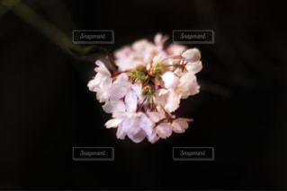 近くの花のアップの写真・画像素材[1135836]