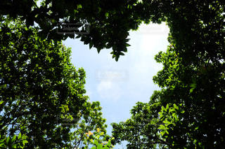 自然,空,木,屋外,樹木,ハート,小笠原諸島,父島,太平洋