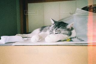 ベッドの上で横になっている猫の写真・画像素材[1234272]