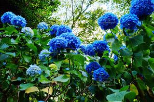 花の写真・画像素材[1340800]
