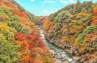 カラフルな日本の美しい紅葉の写真・画像素材[1599462]