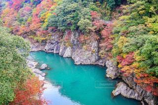 大自然の中の秋の写真・画像素材[1600922]