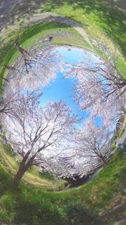 丘の木のパスの写真・画像素材[1145808]