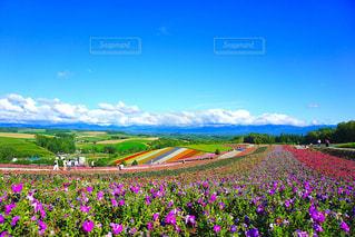 空とお花の写真・画像素材[2421835]