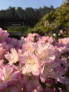 近くの花のアップの写真・画像素材[1145598]