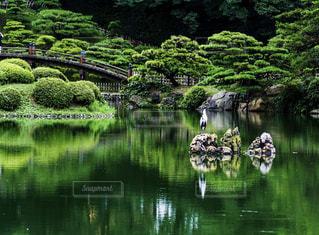 シロサギがいる栗林公園の池の写真・画像素材[1160503]